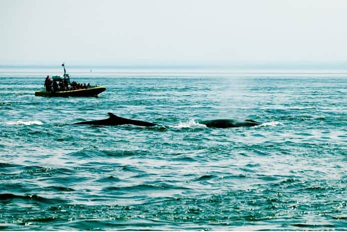 baleines excursion tadoussac